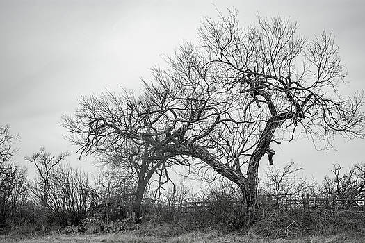 Trees near Austin by Stephanie Johnson