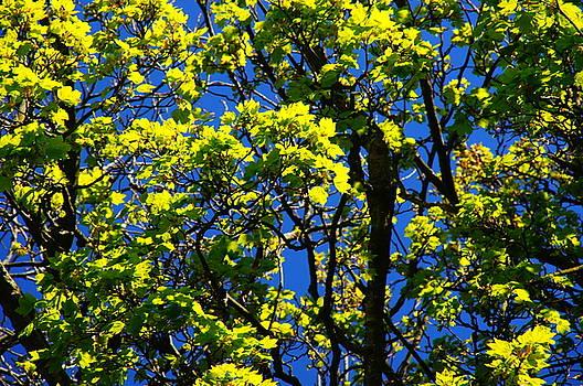 Trees by Nik Watt