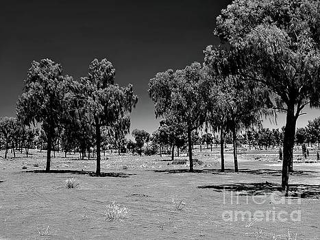 Tim Richards - The Ghost Trees of Uluru BW