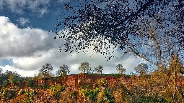 Trees on Bluffs by Dori Basilius