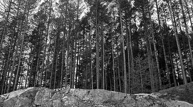 Trees on Stone langford BC by Gregory Varano