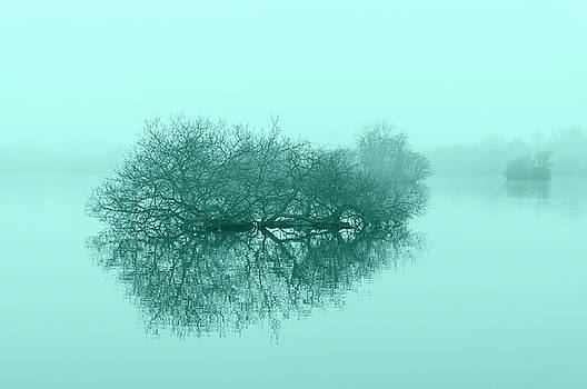 Trees on the lake in Muted tones of blue. by Paul Cullen