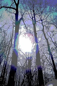 Trees on the Trail by Deborah Rosier