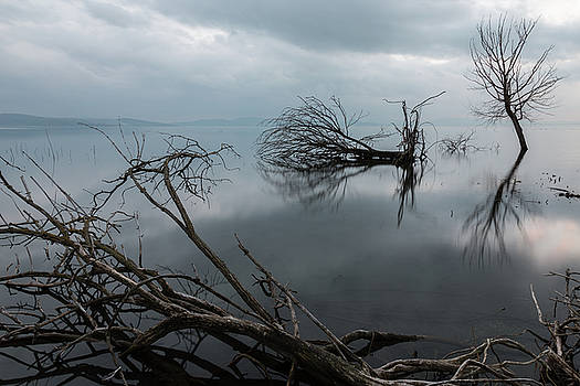 Trees on water by Massimo Discepoli