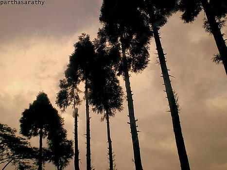 Trees by Parthasarathy Alwar