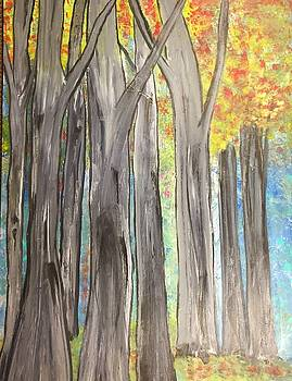 Trees by Paula Brown