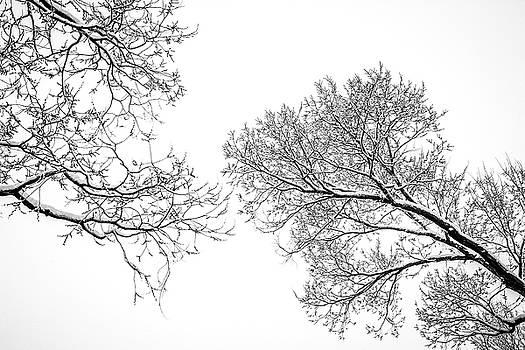Trees Reaching by Marilyn Hunt