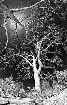 Dan Carmichael - Trees Sky and Sun