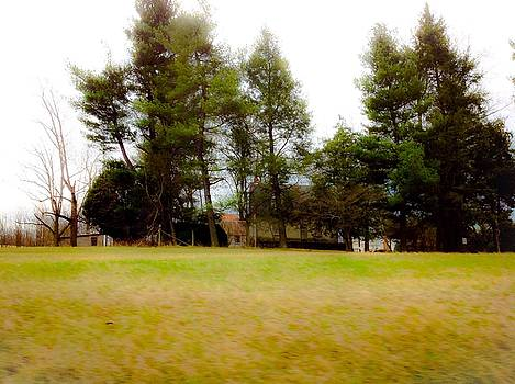 Trees Standing Guard Over Older Home by Debra Lynch