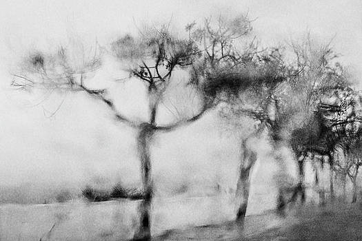 Trees Through the Window by Celso Bressan