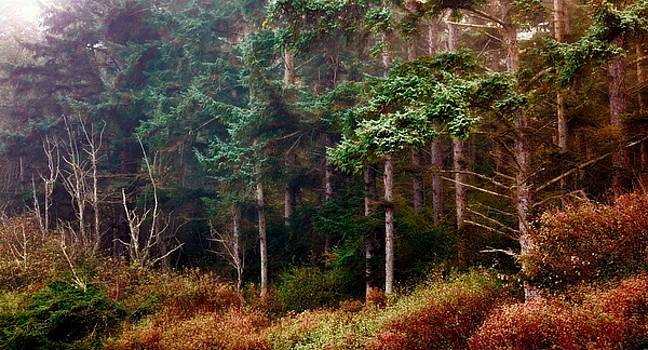 Trees Thru the Fog by Rick Lawler