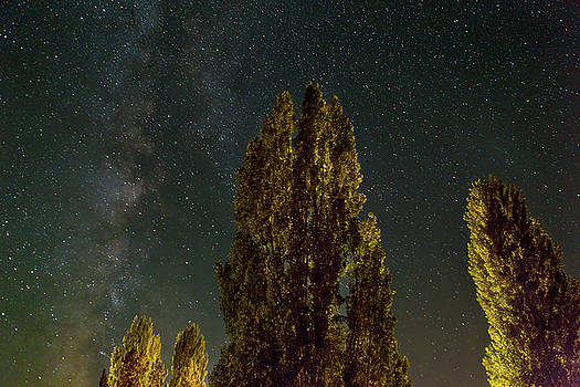 Trees Under the Milky Way on a Starry Night by David Gn
