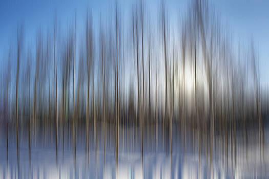 Pam  Elliott - trees Alaska blue abstract