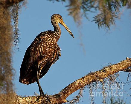 Treetop Observer by John Eide