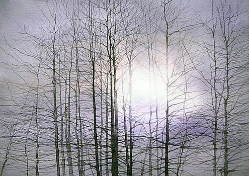 Treetops by Maryann Boysen