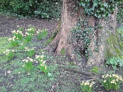 TreeTrunk 1 by Julia Woodman