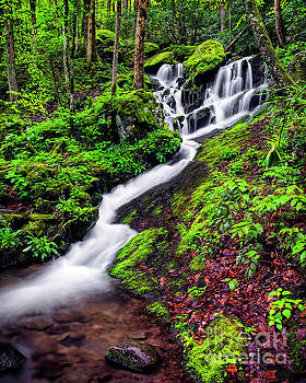Tremont area waterfall by Madonna Martin