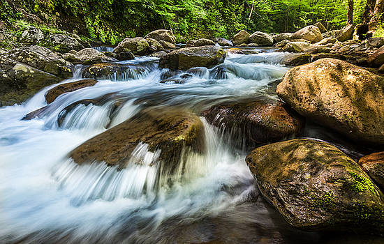 Tremont Spring by Mike  Walker
