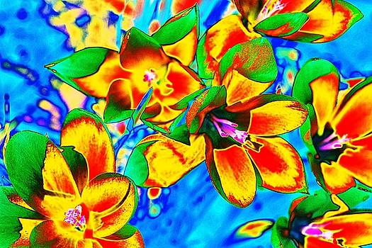 Trendy Violets by Becky Kurth