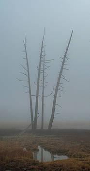 Tress in the Mist by Leslie-margaret Bohle