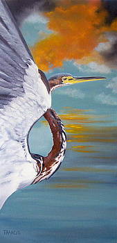 Tri Colored Heron by Donna Francis