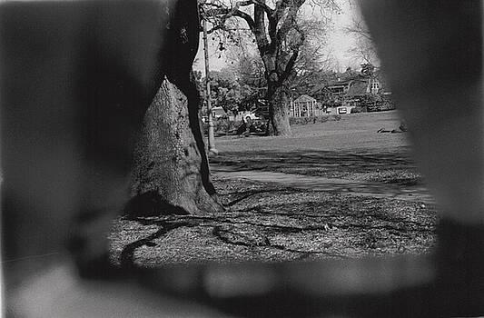 Erik Paul - Triangle Tree