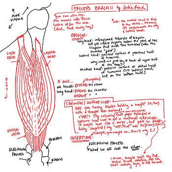 Triceps Brachii by Julie Read
