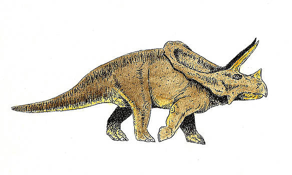 Triceratops by Michael Vigliotti