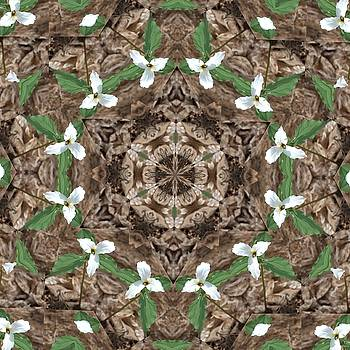 Valerie Kirkwood - Trillium Kaleidoscope