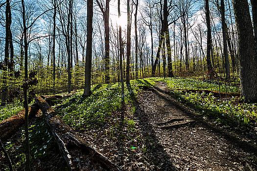 Trillium Trail by Matt Molloy