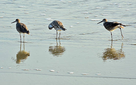 Trio of Willets on Jekyll by Bruce Gourley