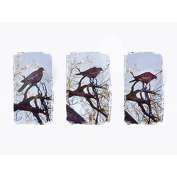 #triptych #birds #iphoneography by Judy Green