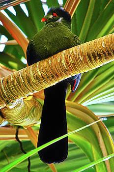 Spade Photo - Tropical Aviator