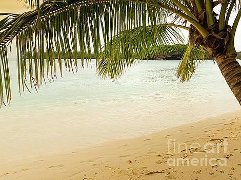 Tim Hester - Tropical Beach Scene