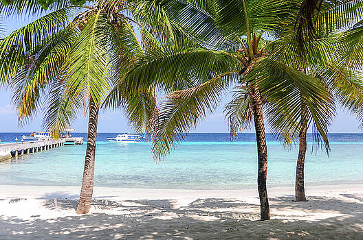 Jenny Rainbow - Tropical Beach with Palms