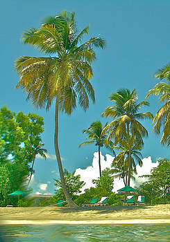 Tropical Calabash by Joshua Ackerman