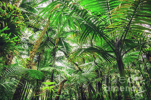 Tropical Canopy by Joan McCool