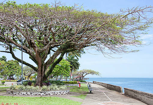 Ramunas Bruzas - Tropical Capital