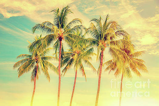 Delphimages Photo Creations - Tropical