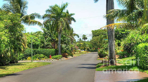 Tropical Feel Residential Street by Ules Barnwell