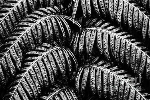 Tropical fern Black White by Jan Brons