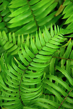 Tropical Fern by Brian Puyear