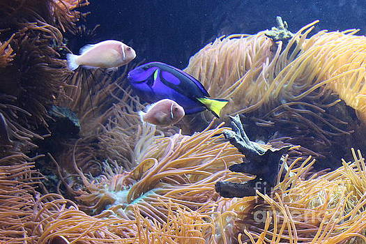 Tropical Fish and Sea Anemones by Dora Sofia Caputo Photographic Art and Design