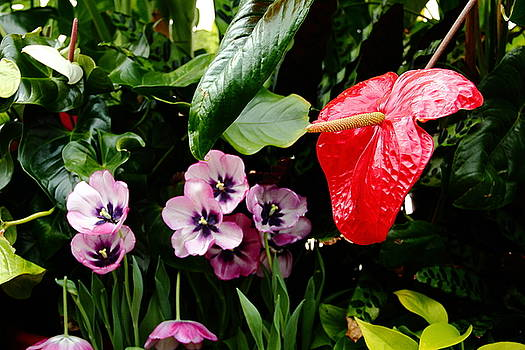 Allen Nice-Webb - Tropical Flamingo Red
