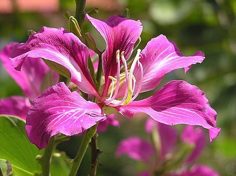 Tropical Flower by Heather Bethke