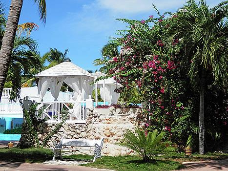 Tropical Garden by Pema Hou