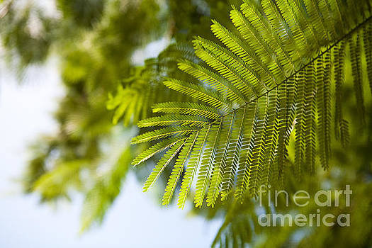 Tropical Green Leaf by Kaitlyn Suter