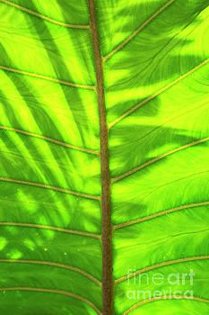 Charmian Vistaunet - Tropical Green Leaf Texture