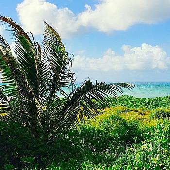 Hawaiian Coconut Palm by Sharon Mau