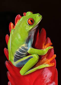 Tropical Jewel by Paul Bratescu